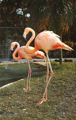top010121 - Flamingos