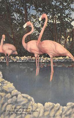 top010127 - Flamingos