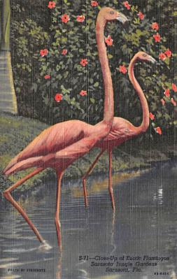 top010135 - Flamingos