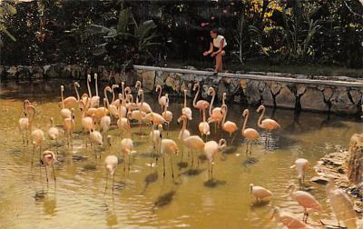 top010137 - Flamingos