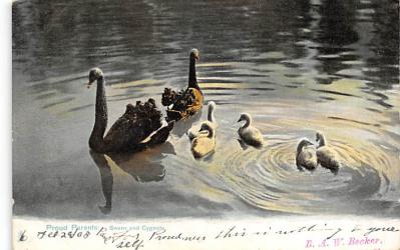 top010147 - Swans