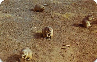 top010189 - Prairie Dogs