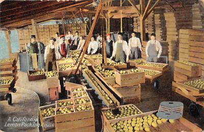 top013957 - Fruit Assorted