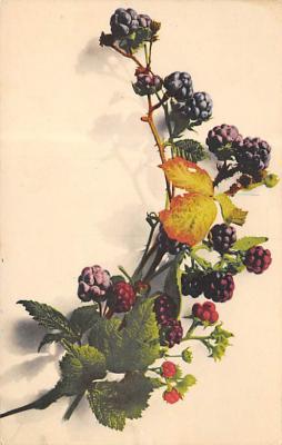 top013979 - Fruit Assorted
