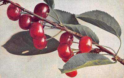top014011 - Fruit Assorted