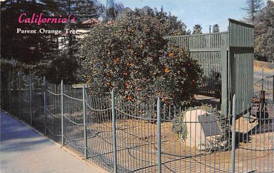 top014035 - Fruit Assorted