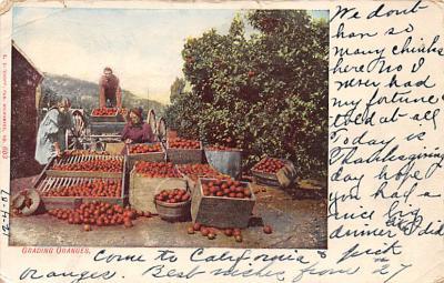top014045 - Fruit Assorted