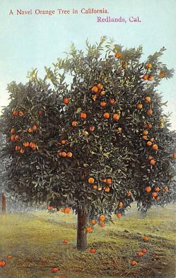top014133 - Fruit Assorted