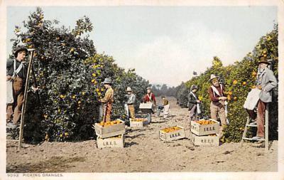 top014137 - Fruit Assorted