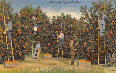 top014155 - Fruit Assorted