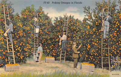 top014157 - Fruit Assorted