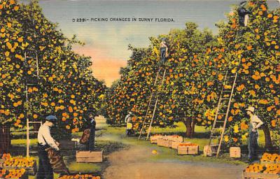 top014161 - Fruit Assorted