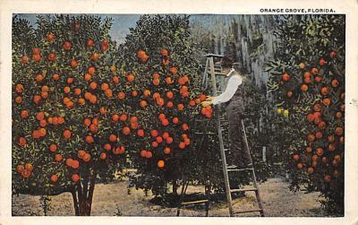 top014177 - Fruit Assorted