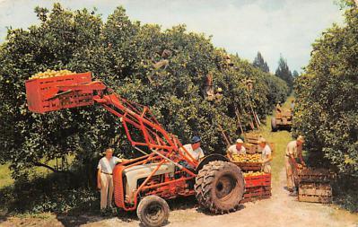 top014193 - Fruit Assorted