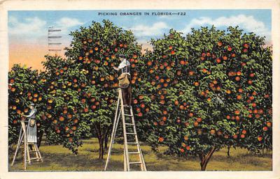 top014197 - Fruit Assorted