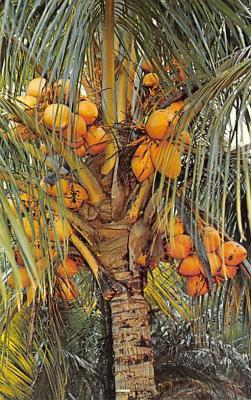 top014231 - Fruit Assorted