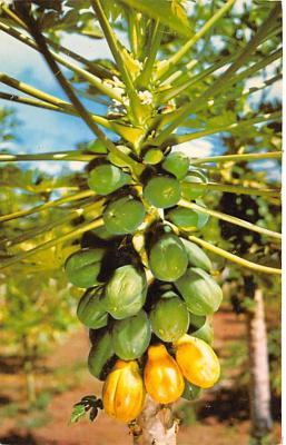 top014235 - Fruit Assorted