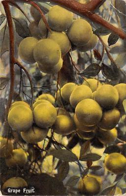 top014245 - Fruit Assorted