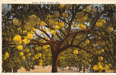 top014253 - Fruit Assorted