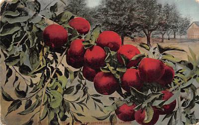 top014261 - Fruit Assorted