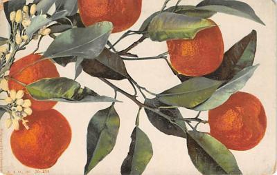 top014269 - Fruit Assorted