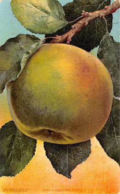 top014279 - Fruit Assorted