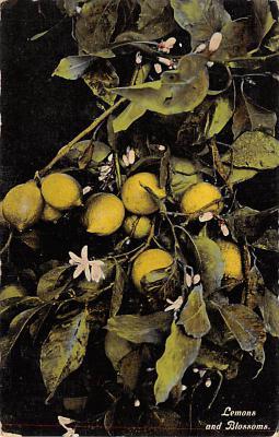 top014297 - Fruit Assorted
