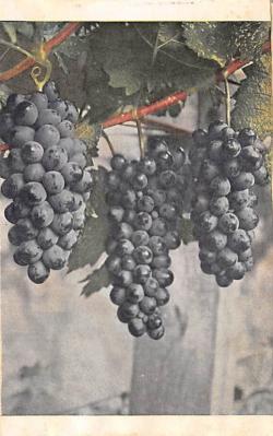 top014309 - Fruit Assorted