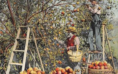 top014341 - Fruit Assorted