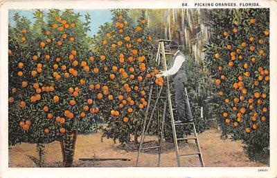 top014357 - Fruit Assorted