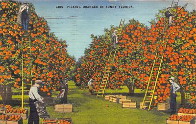 top014359 - Fruit Assorted