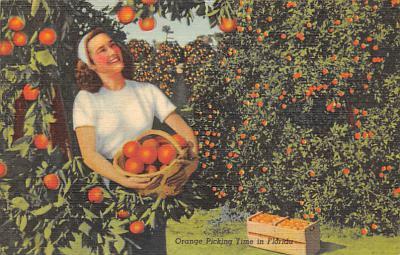 top014379 - Fruit Assorted
