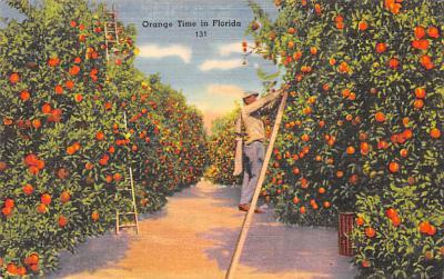 top014383 - Fruit Assorted