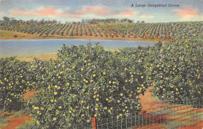 top014385 - Fruit Assorted