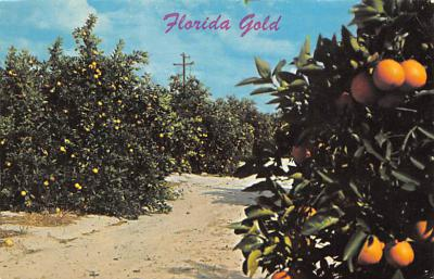 top014405 - Fruit Assorted