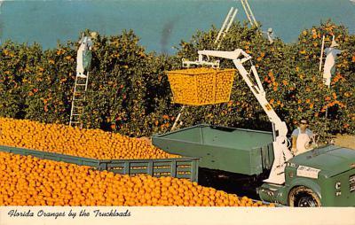 top014423 - Fruit Assorted