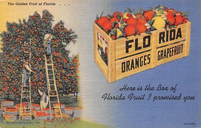 top014427 - Fruit Assorted