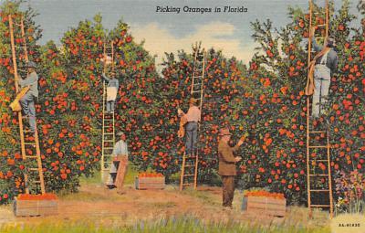 top014433 - Fruit Assorted