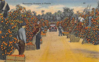 top014437 - Fruit Assorted