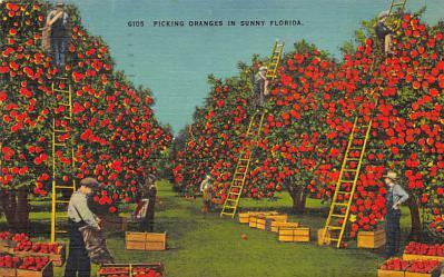 top014441 - Fruit Assorted