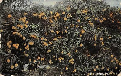 top014447 - Fruit Assorted