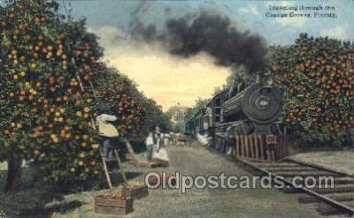 tra006291 - The Orange Groves, Florida, USA Train Trains Locomotive, Steam Engine,  Postcard Postcards