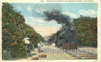 trn001204 - Traveling Through The Orange Groves, California, CA USA Trains, Railroads Postcard Post Card Old Vintage Antique