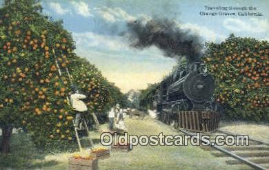 trn001432 - Orange Groves, California, CA USA Trains, Railroads Postcard Post Card Old Vintage Antique