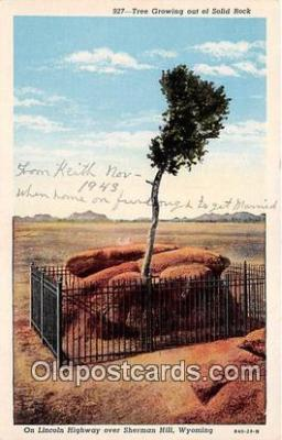 Tree, Solid Rock