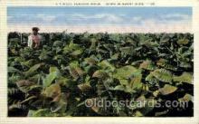 tob001002 - Tobacco Postcard Postcards
