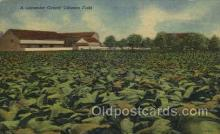 tob001016 - Tobacco Postcard Postcards