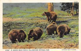 top002823 - Bear Post Card