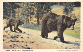 top002829 - Bear Post Card