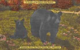 top002835 - Bear Post Card